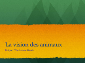 La vision des animaux, mon projet d'expo-sciences…