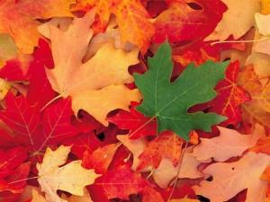 Pourquoi les feuilles tombent-elle à l'automne?