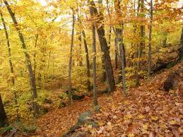 Pourquoi les feuilles tombent-elles à l'automne?