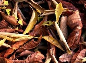Pourquoi les feuille tombent-elle à l'automne?