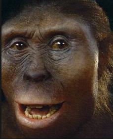 La femme de 3 180 000 ans passés