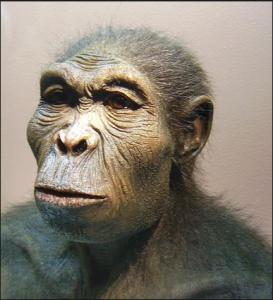 Lucy la Femme de 3 180 000 ans